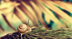 Snail at abstract background Stock Image