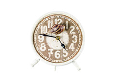 Snail on an alarm clock, time concept.Clipping path Stock Image