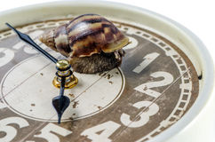 Snail on an alarm clock, time concept.Clipping path Stock Photography
