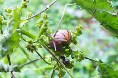 Snail. Animal closeup leaves branch green spawn egg eggsnail raunyday Royalty Free Stock Images