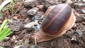 Snail. Animal forest park cute-animal Stock Images