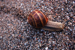 Snail. Animal and Nature. Focus stock photography