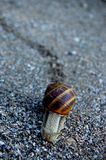 Snail. Animal and Nature Focus stock image