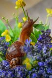 Snail animals Stock Image