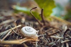 Snail. Animals nature Royalty Free Stock Photos