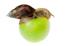 Snail and apple Royalty Free Stock Photos