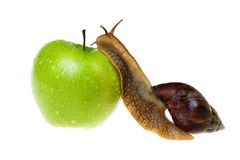 Snail and apple Royalty Free Stock Image