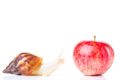Snail and apple Stock Photo