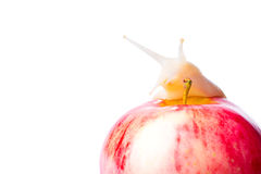 Snail and apple Royalty Free Stock Images