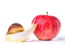 Snail and apple Stock Images