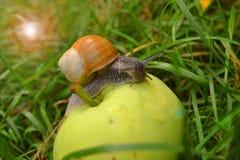 Snail on the apple Stock Photo