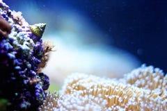 Snail in an aquarium royalty free stock image