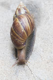Snail as concrete background royalty free stock photos