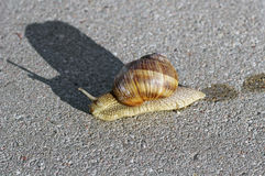 Snail on the asphalt Royalty Free Stock Photos