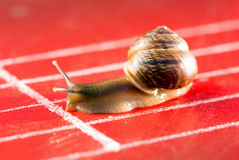 Snail on the athletic track Royalty Free Stock Photo