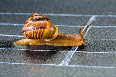 Snail on the athletic track. Crosses the finish line Stock Photos