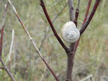 Snail on tree Royalty Free Stock Image