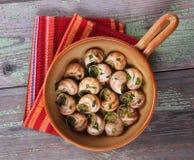 Snail au gratin Stock Images