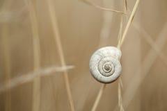 Snail on Autum Grass Blade Stock Photos