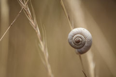 Snail on Autum Grass Blade Royalty Free Stock Image
