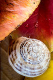 Snail on the Autumn leaves. Slimey snail on wet leaves Royalty Free Stock Images