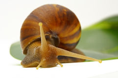 Snail-b Stock Photos