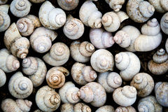 Snail background Royalty Free Stock Images