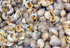 Snail Background stock photo