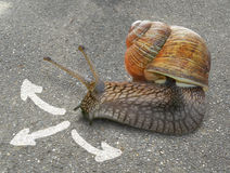 Snail on background with three arrows. Stock Photos