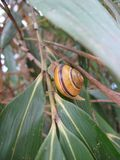 Snail on bamboo leaves Stock Photo