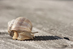 Snail on a bench Stock Images