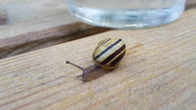 Snail Besides Water Glass On Wooden Table Stock Photo