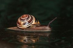 Snail on a black background. Night Stock Photo