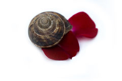 Snail in bloom Royalty Free Stock Photos