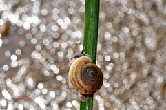 Snail bokeh. From Thailand background Royalty Free Stock Photos
