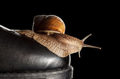 Snail and boot Stock Photos