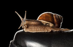 Snail on boot Royalty Free Stock Images