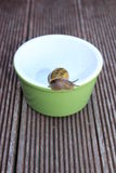 Snail on bowl Stock Photography