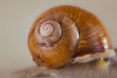 Snail, Bright, shell, sticky Stock Photo