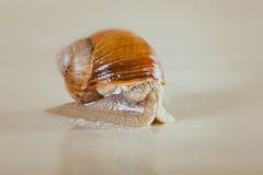 Snail, Bright, shell, sticky Royalty Free Stock Photos