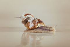 Snail, Bright, shell, sticky Royalty Free Stock Photography