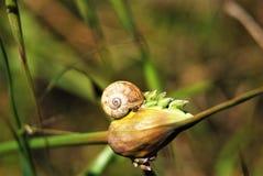 Snail on a bulb. Snail hibernating in a bulb Royalty Free Stock Photos