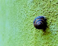 Snail on a bumpy colorfull wall close up concep. Snail on a bumpy colorfull green wall close up concept royalty free stock photo