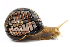 Snail with Calm Down message Stock Images
