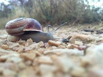 Snail on the Camino de Santiago Saint James Way. Pilgrim`s journey. Camino de Santiago. Spain. Snail. Autumn Stock Photos