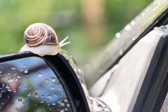 Snail on the car. Snail crawls along the side mirror of the car rear view Royalty Free Stock Photography