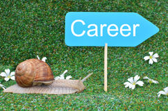 Snail and Career sign Royalty Free Stock Photo