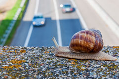Snail and cars Royalty Free Stock Photo