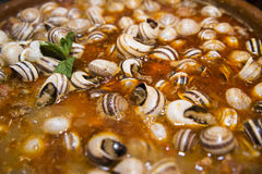 Snail casserole. Typical spanish dish Stock Photography