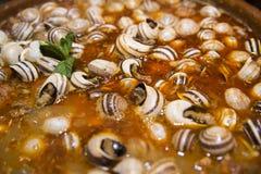 Snail casserole Stock Photography